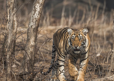 Dudhwa National Park India